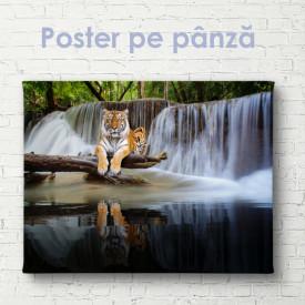 Poster, Tigru grațios pe fundalul unei cascade