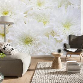 Fototapet, Crizanteme albe 1