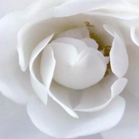 Fototapet, Floare albă