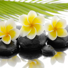 Fototapet, Flori galbene pe pietre negre