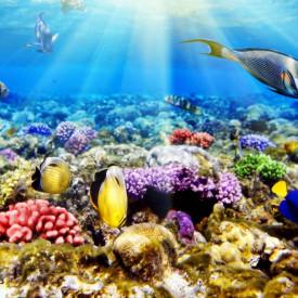 Fototapet, Razele soarelui sub apă