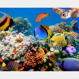 Fototapete, Pești de diferite culori