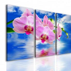 Multicanvas, Orhideea roz pe un fundal albastru.