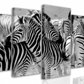 Multicanvas, Zebra
