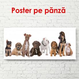 Poster, Câini frumoși pe un fundal alb