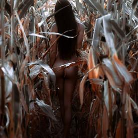 Poster, Fată în lanul de porumb
