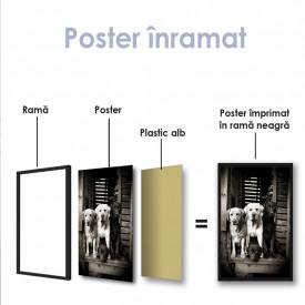 Poster, Labradorii