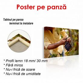 Poster, Struguri în mâinile unui bărbat