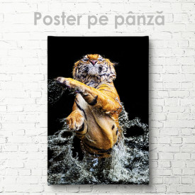 Poster, Tigrul grațios