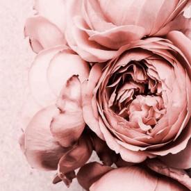Tablou, Bujori roz pal