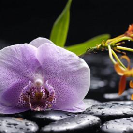 Fototapet, Orhidee lila