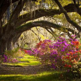Fototapet, Pădurea de primăvară