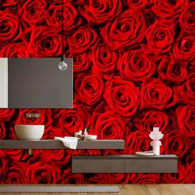 Fototapet, Trandafiri roșii
