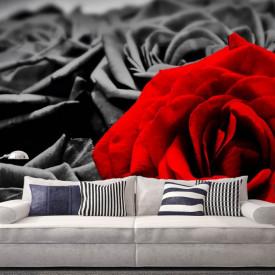 Fototapet, Un trandafir roșu pe un fundal alb-negru