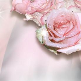 Fototapete 3D, Trandafiri roz cu picături de rouă pe un fundal roz pal