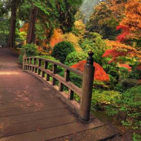 Fototapete Frumusețea pădurii