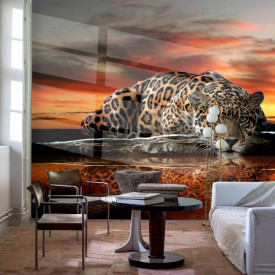 Fototapete, Leopardul bea apă la apus