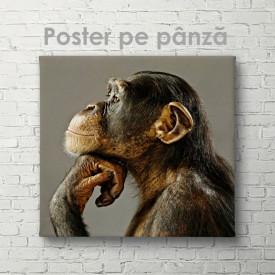 Poster, Privire gânditoare