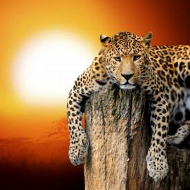 Fototapet, Leopardul pe fundalul unui apus