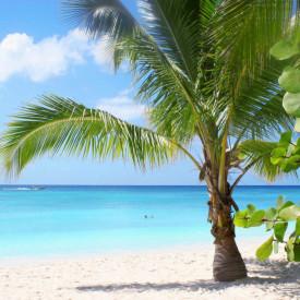 Fototapet, Plajă cu palmieri și cerul însorit