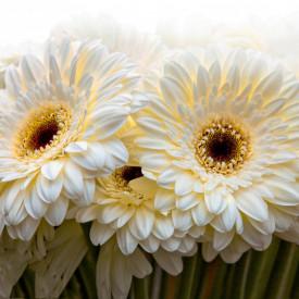 Fototapet, Un buchet cu flori albe
