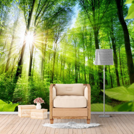 Fototapete 3D, Pădure trălucitoare