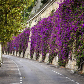 Fototapete, Flori violete