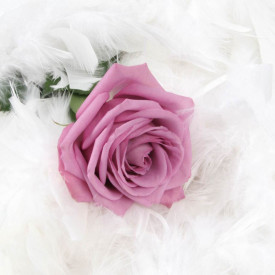 Fototapete, Un trandafir roz și pene pufoase