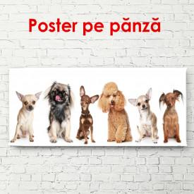 Poster, Câini diferiți pe un fundal alb