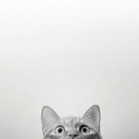 Poster, Imagine minimalistă a unei pisici pe un fundal gri