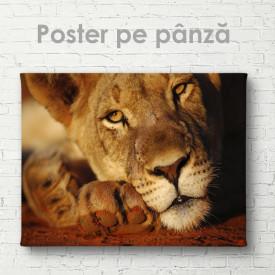 Poster, Leoaică