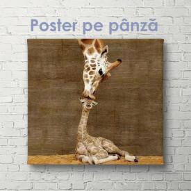 Poster, Mama și bebelușul girafă