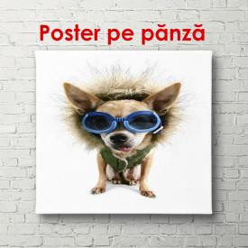 Poster, O câine în albastru ochelari