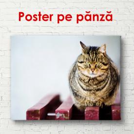 Poster, O pisica sta pe bancă