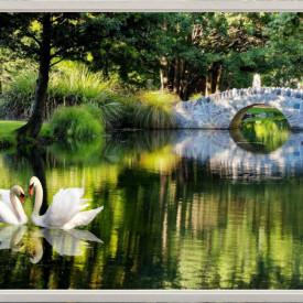 Fototapet, Lebede pe lac