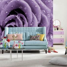Fototapet, Un trandafir violet cu picături de rouă