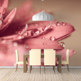 Fototapete, Bruma dimineții pe petalele roz