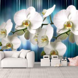Fototapete, Orhidee albă pe fundal albastru