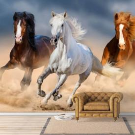Fototapete, Trei cai ce galopează.