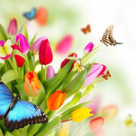 Fototapete, Un buchet de lalele și fluturii multicolori
