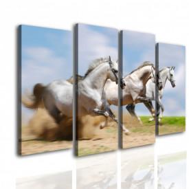 Multicanvas, Trei cai albi