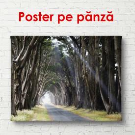 Poster, Aleea din pădurea