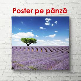 Poster, Arbore verde și câmpul de lavandă