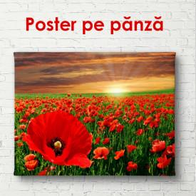 Poster, Câmp de maci pe fundal de apus de soare