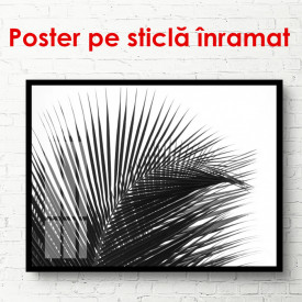 Poster, Frunze de palmier pe un fond alb