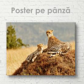 Poster, Gheparzi grațioși