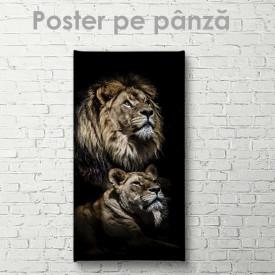 Poster, Leu