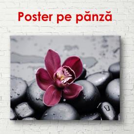 Poster, Orhideea de culoare burgundă pe pietre negre
