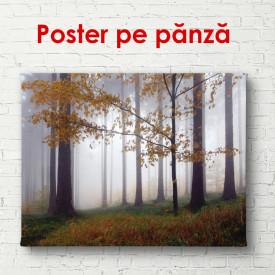Poster, Pădurea ceață