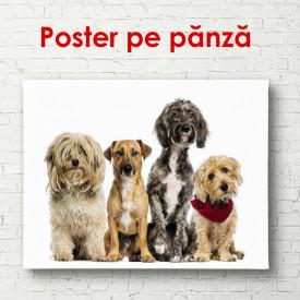 Poster, Patru câini pe un fond alb